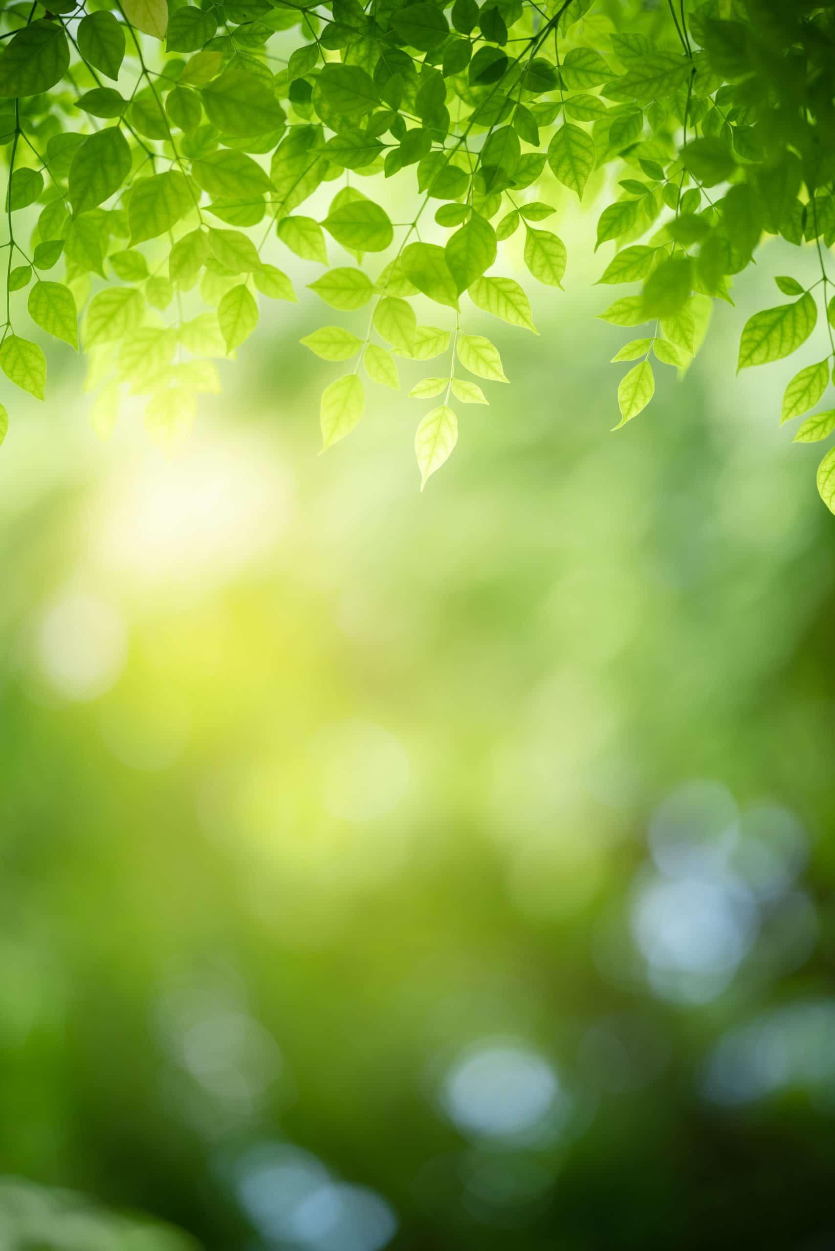 Lys i bøgeblade fobibehandling.dk behandling af edderkopfobi (araknofobi)